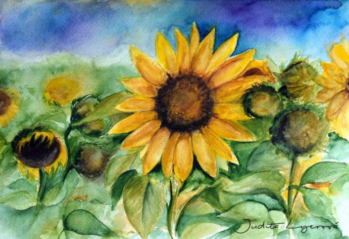 Návrh na pohlednici pro Maria's Mail, slunečnice, akvarel
